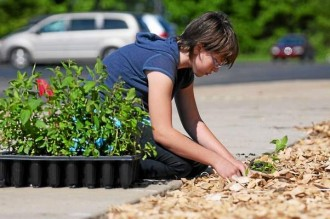 A person putting a plant in the ground
